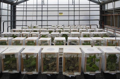 greenhouse boxes image