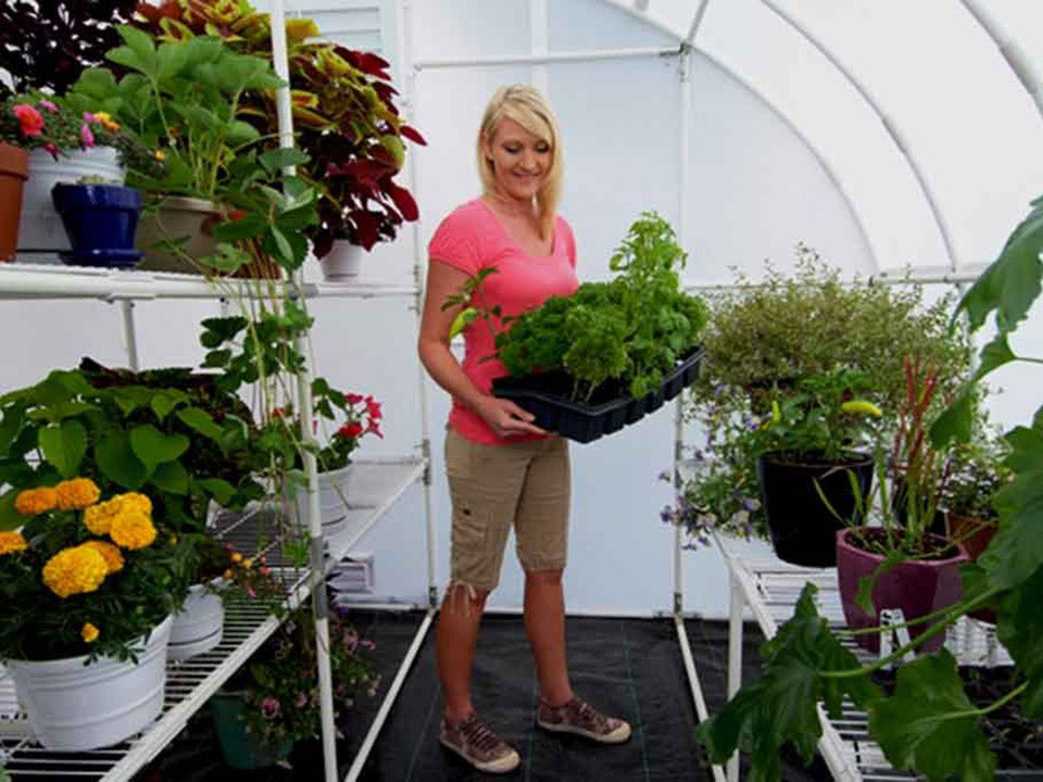 Solexx 8ft x 16ft Harvester Greenhouse G-416 - interior view - a woman in the middle carrying a pot with plants