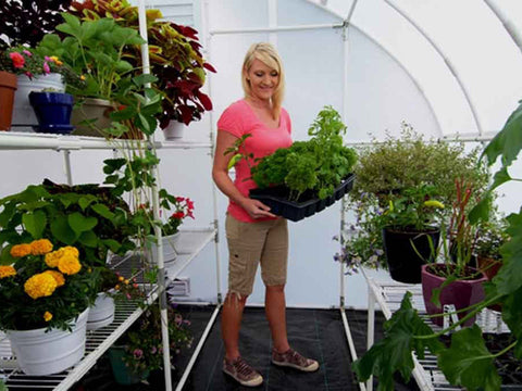 Image of Solexx  8ft x 24ft Harvester Greenhouse G-424 - interior view - with plants and flowers -  a woman inside gardening