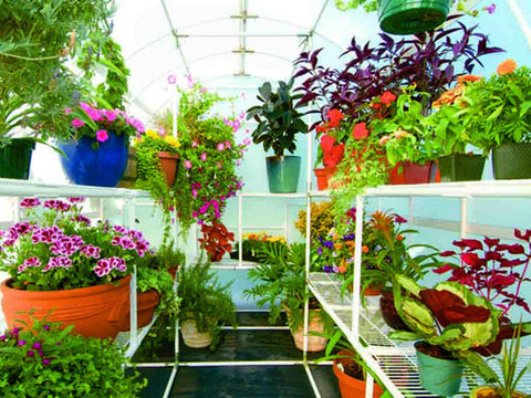 Image of Solexx 8ft x 8ft Gardener's Oasis Greenhouse G-208 - interior view with bench shelves with plants and flowers