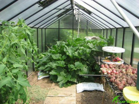 Riverstone Monticello Greenhouse 8x8 - Premium Package - interior view with plants
