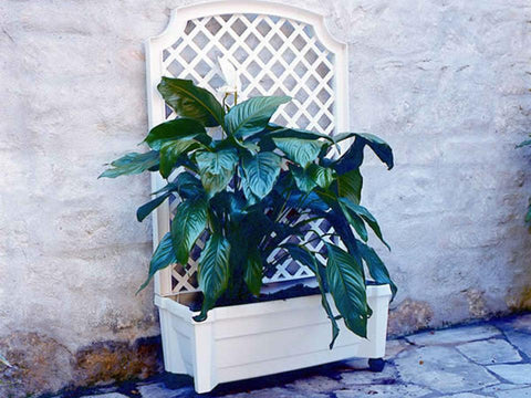 Image of Calypso Planter White