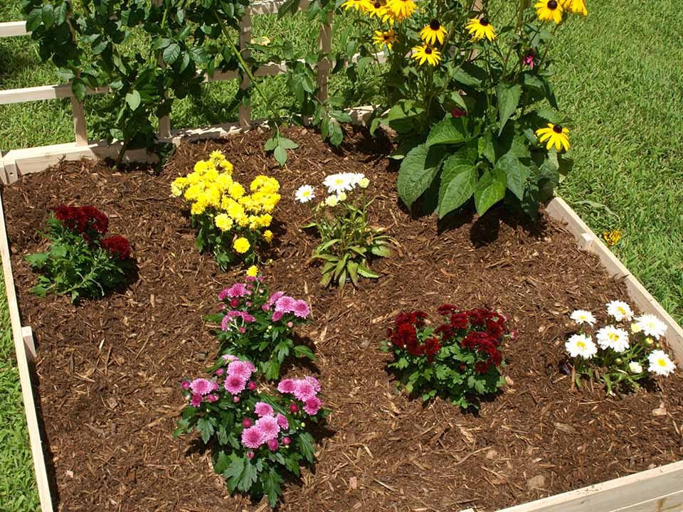 Eden Garden Bed with flowers