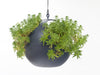 Image of ELHO Euro Hanging Planters - Set of 2