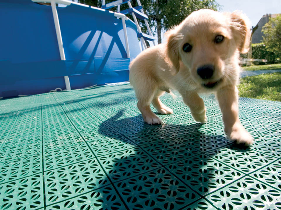A puppy on Riverstone Flooring Panels