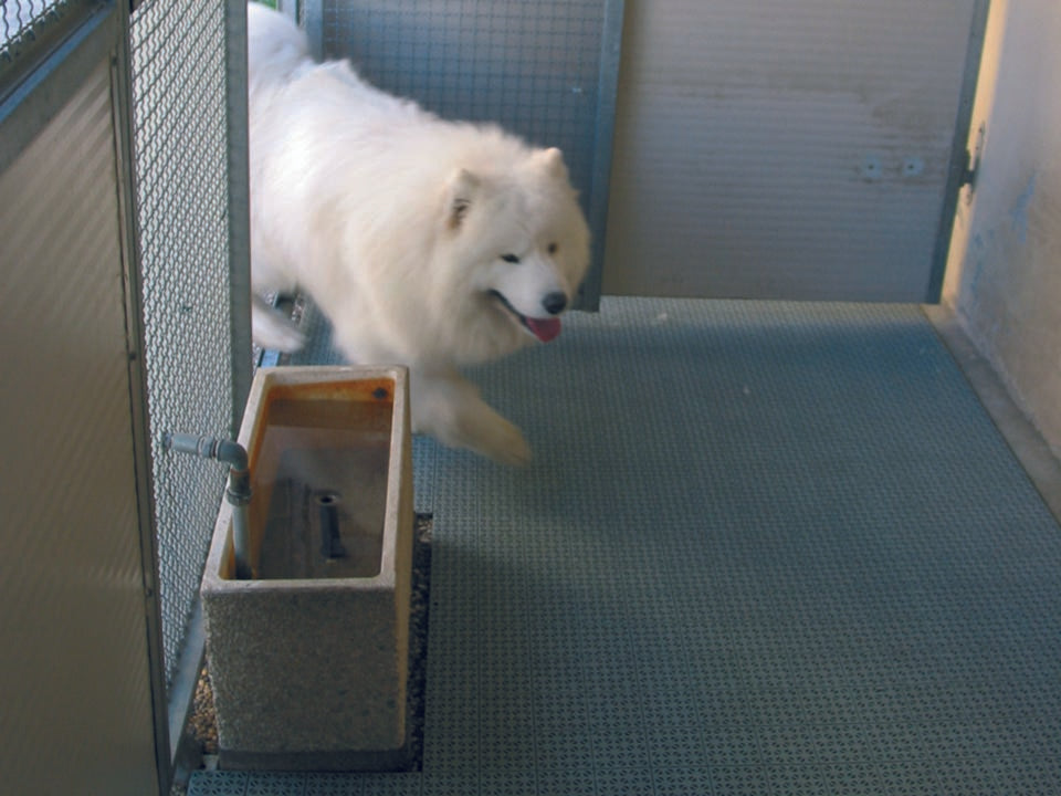 Riverstone Flooring Panels - Used in a dog pen