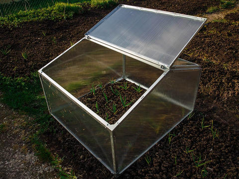 Delta Park Gable Roof Cold Frame with plants inside . Left roof panel open.