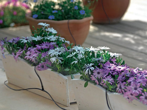 Image of Genesis Drip Irrigation System with beautiful flowers in side view