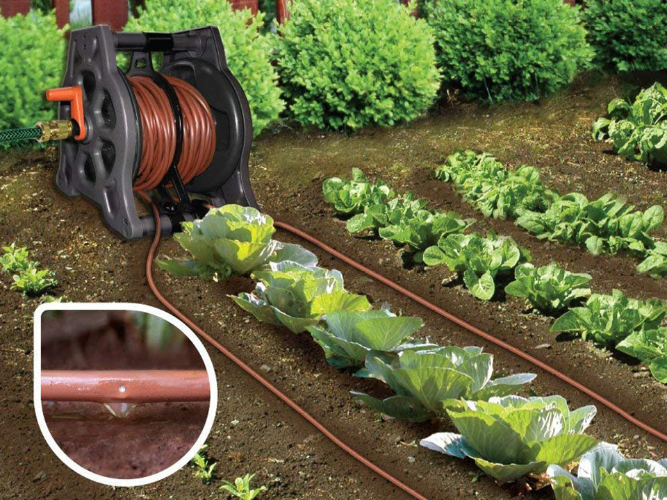 Genesis Drip Irrigation System in garden watering plants - with a close up view of the drip on the left side
