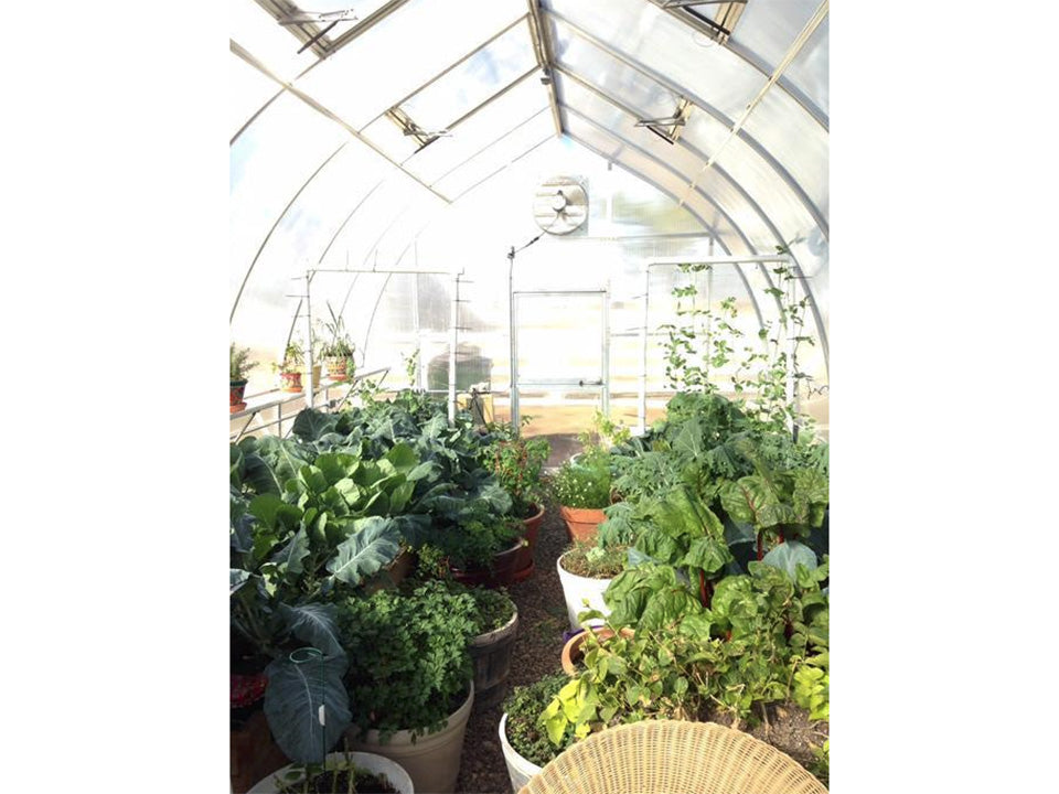 Hoklartherm Riga XL 8 Greenhouse 14x26 interior view showing plants inside