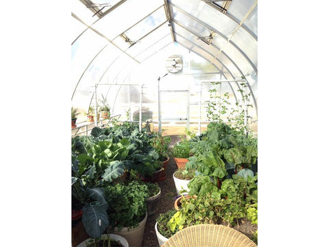 Image of Hoklartherm Riga XL 6 Greenhouse 14x19 internal view with plants inside