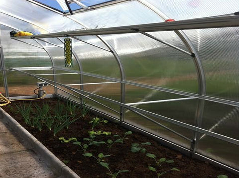 Image of Hoklartherm Riga XL 5 Greenhouse 14x16 with seedlings on the ground