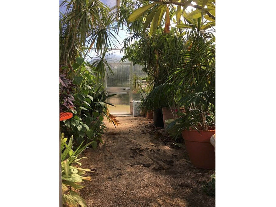 Hoklartherm Riga XL 6 Greenhouse 14x19 interior view with plants and trees inside