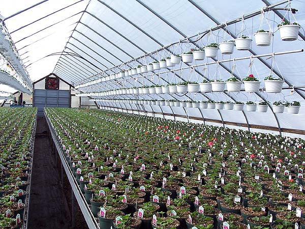 palring 146 uv af ir shiny woven greenhouse cover greenhouse