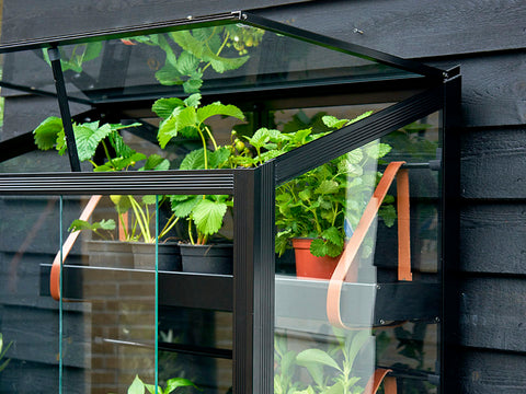 Image of Close up View of Juliana City Greenhouse with plants against a wall and open roof windows