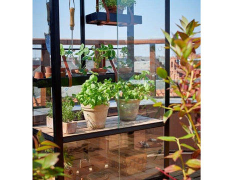 Image of Juliana City Greenhouse. Left Glass door open. With Plants inside