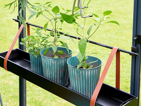 Image of Medium Juliana Hanging Shelf with Leather Straps and three plant pots