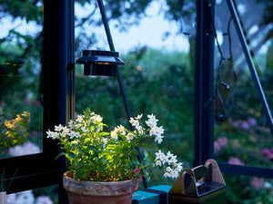 Juliana Greenhouse Interior Solar Light shining on a plant in a greenhouse