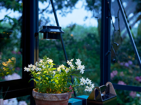 Image of Juliana Greenhouse Interior Solar Light shining on a plant in a greenhouse