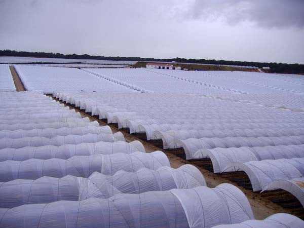 Palring 146 UV, AF & IR Shiny Woven Greenhouse Cover