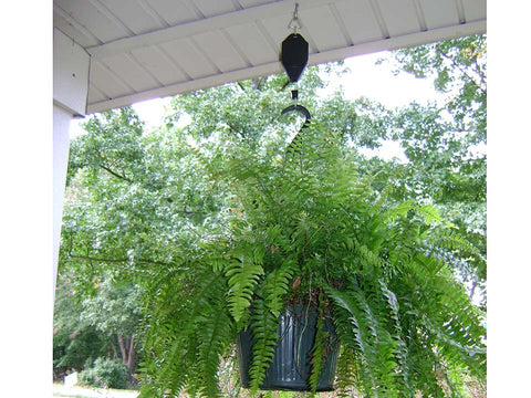 Image of Hanging plant using plant caddie hook