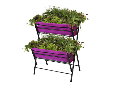 Purple Poppy Go Two Tier with plants