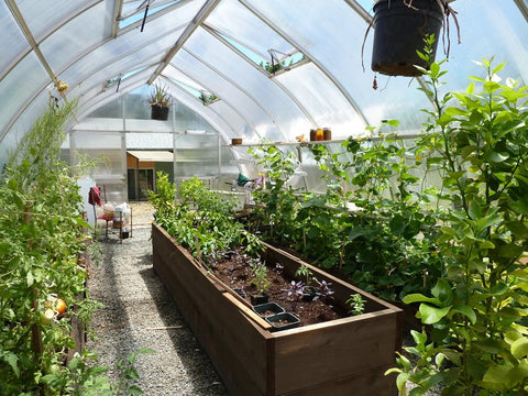 Full image of the Hoklartherm Riga XL 5 Greenhouse with green plants inside for Hobby Greenhouse