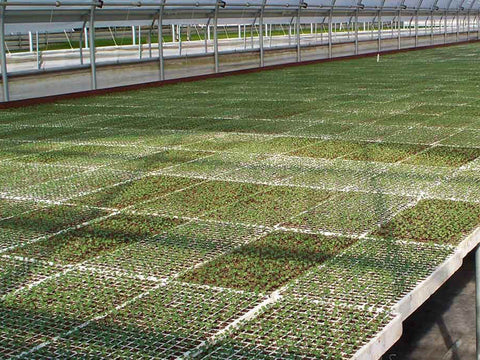 A number of RSI Hydroponic Floating Seeding Trays with seedlings