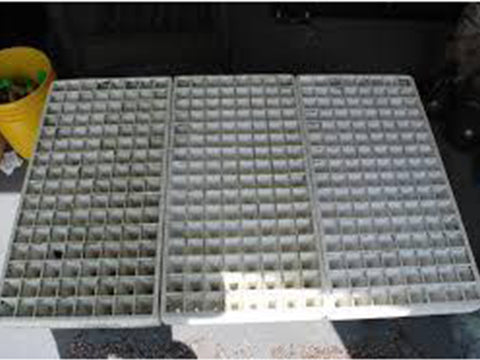 Image of 3 empty RSI Hydroponic Floating Seeding Trays