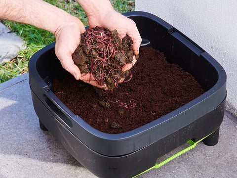 Open MAZE Worm Farm compost tray with hands full of worm soil
