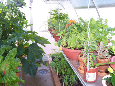 Image of Hanging shelves in the Hoklartherm Riga 2s Greenhouse 7.8x7