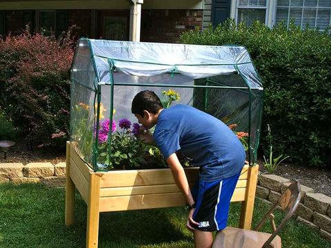 Fully set up Riverstone Eden Mini Greenhouse with a boy looking at the greenhouse