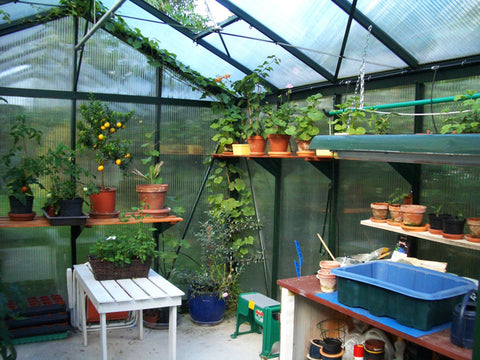 Image of Inside view of the Janssens Royal Victorian VI34 Greenhouse 10ft x 15ft