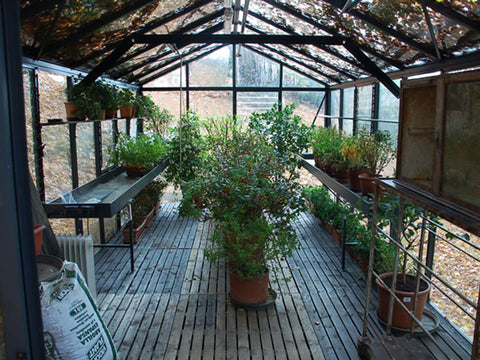 Inside view of the Janssens Royal Victorian VI36 Greenhouse 10ft x 20ft
