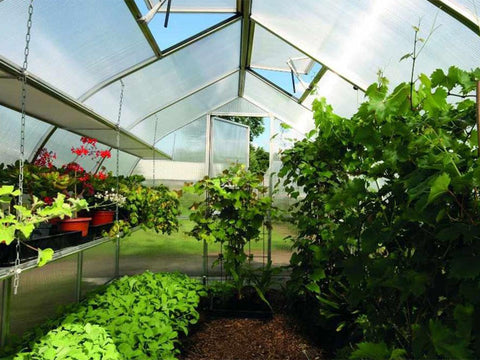 Image of Riga shelves on the left side of the greenhouse. The top shelf is empty and the bottom shelf has potted plants