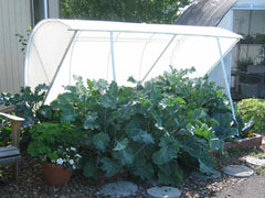Deluxe Cold Frame