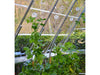 Image of Trellising Kit Pro for the Palram and Rion Greenhouses- with plants