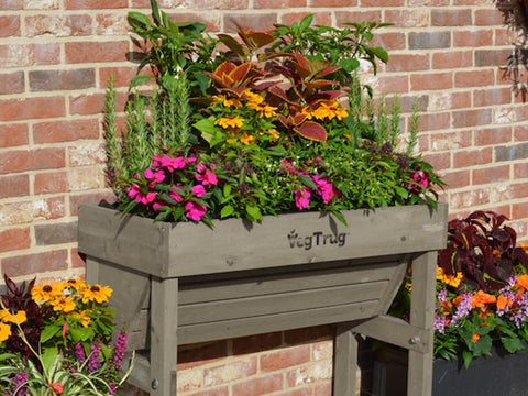 Small Grey VegTrug Wall Hugger Planter with plants