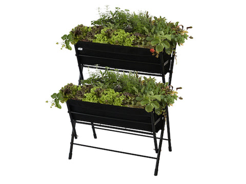 Black Poppy Go Two Tier with plants