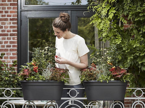 "Image of ELHO Bridge Planter with Cover Works on Railings Up to 2.5"". Woman picking tomatoes from the planter"