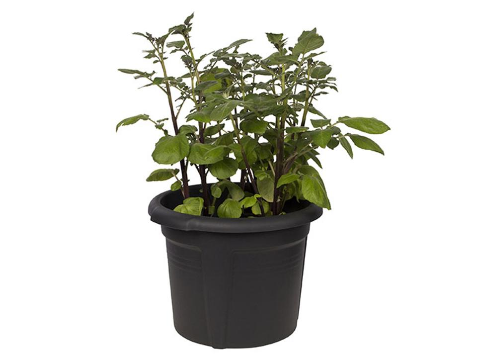 ELHO Potato Pot Planter with grown leaves