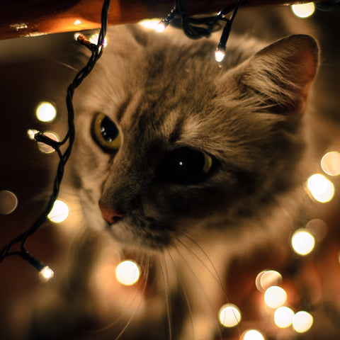 Cat and Ligths