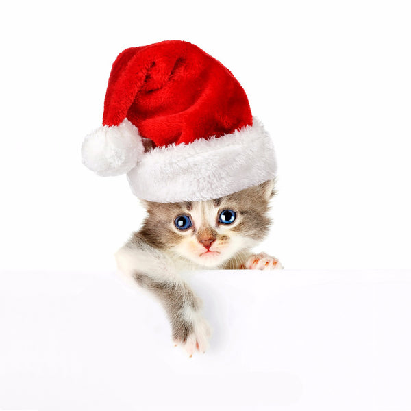 Adorable Cat in Santa Hat - Canvas Prints