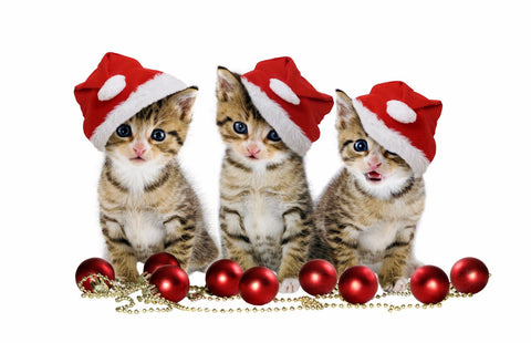 Kittens in Santa Hat