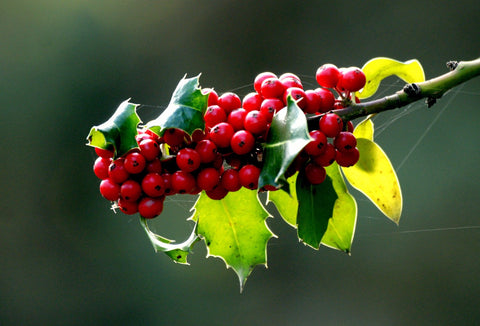 Red Berries & Green Leaves