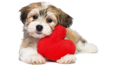 Best Valentines Day Gift - Cute Dog with Heart by Sina Irani