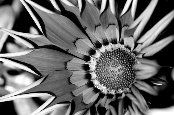 Monochromatic flower - Framed Prints