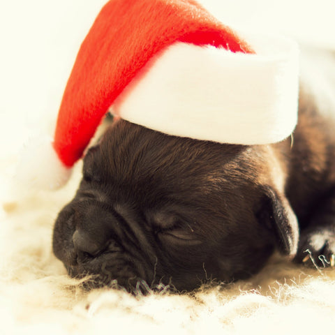 Sleeping Dog in Santa Hat