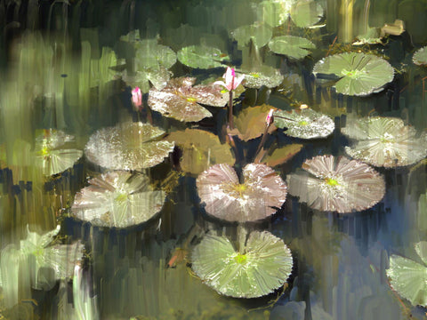 Lily Pond - Canvas Prints