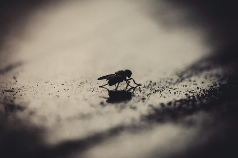 Alone Fly